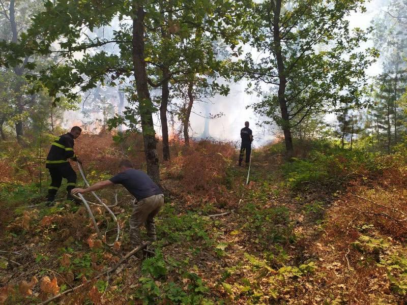Горски и пожарникари гасят голям пожар между селата Вресово и Зайчар