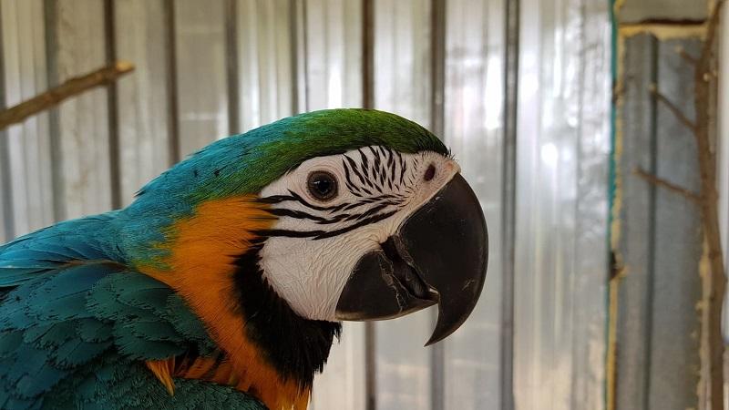 Запознайте се с Пако и Моли – приказливите бебета на зоопарка в Бургас