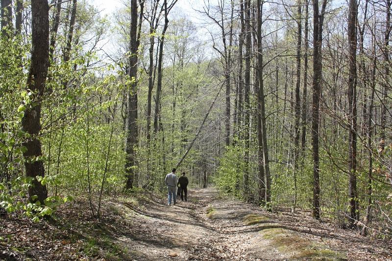 Споделете свои преживявания от разходка в гората