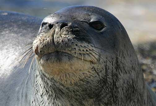 Кой гони Димо Лудия от Созопол край бреговете на Намибия?