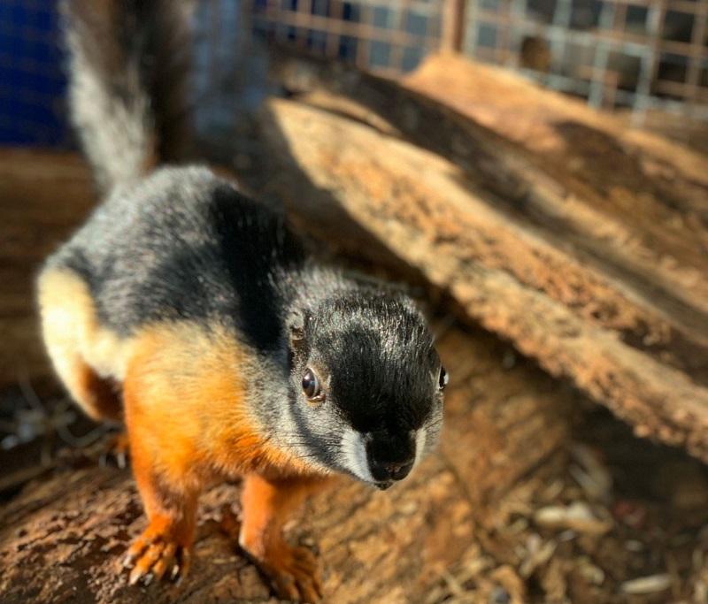 Игриви чинчили и екзотични катерици са най-новите обитатели на Зоопарк Бургас