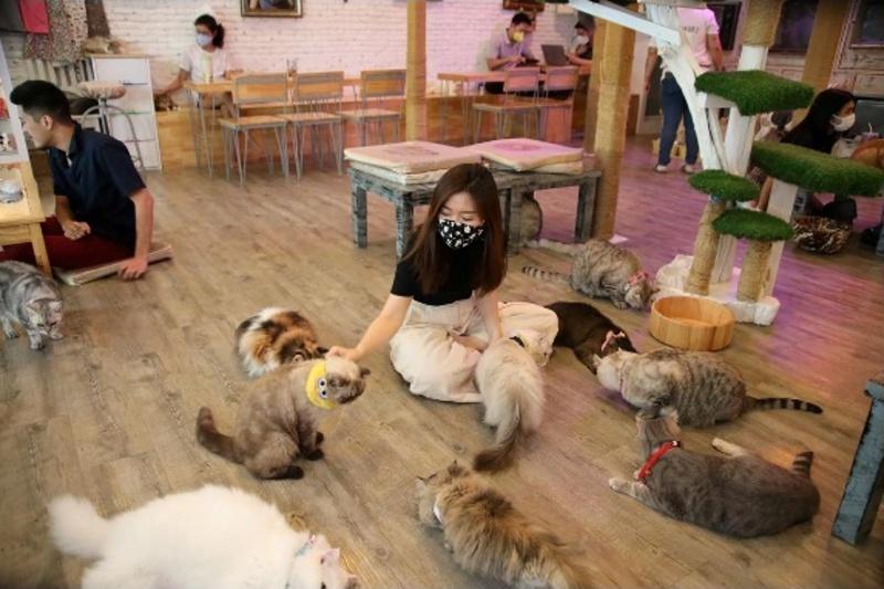 Котешко кафене отново приема посетители