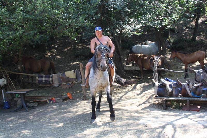 Конете на Румен през зимата носят дърва, а лятото разхождат туристи