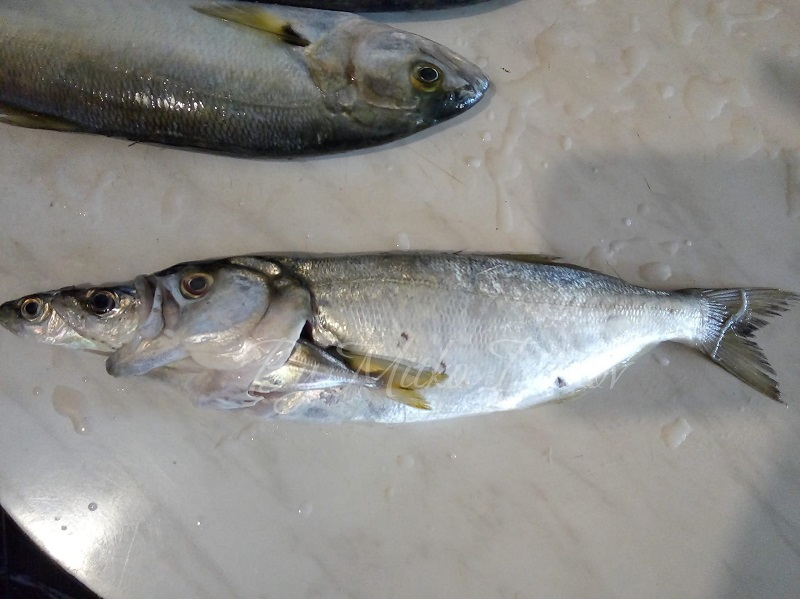 """Курсът на рибата за 23.11.2020: """"Черен петък"""" за чернокопа"""