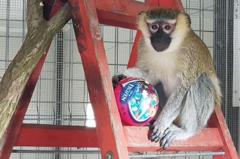 Лемурите и маймунките пристигнаха в Зоопарк Бургас
