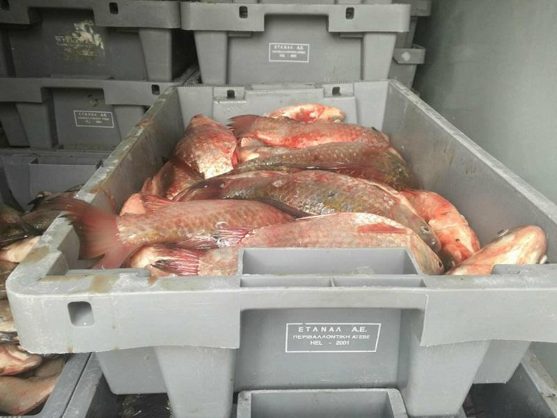Акция край Меден рудник, задържаха два буса, натъпкани с бракониерска риба