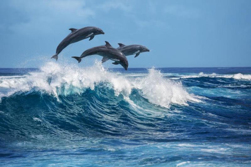 Вижте делфини на плажа в Несебър