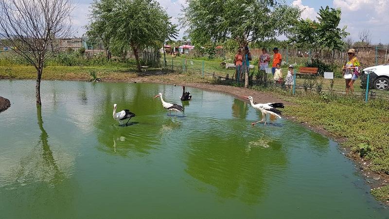 Зоологическата градина в Бургас приюти ранени птици без шанс в дивата природа