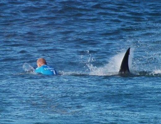 Акула разкъса бедрото на професионален сърфист