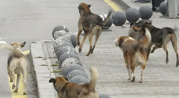 Бездомните кучета повече от армията