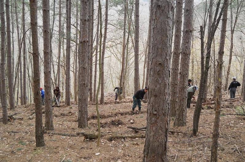 3 милиона фиданки ще засадят горските