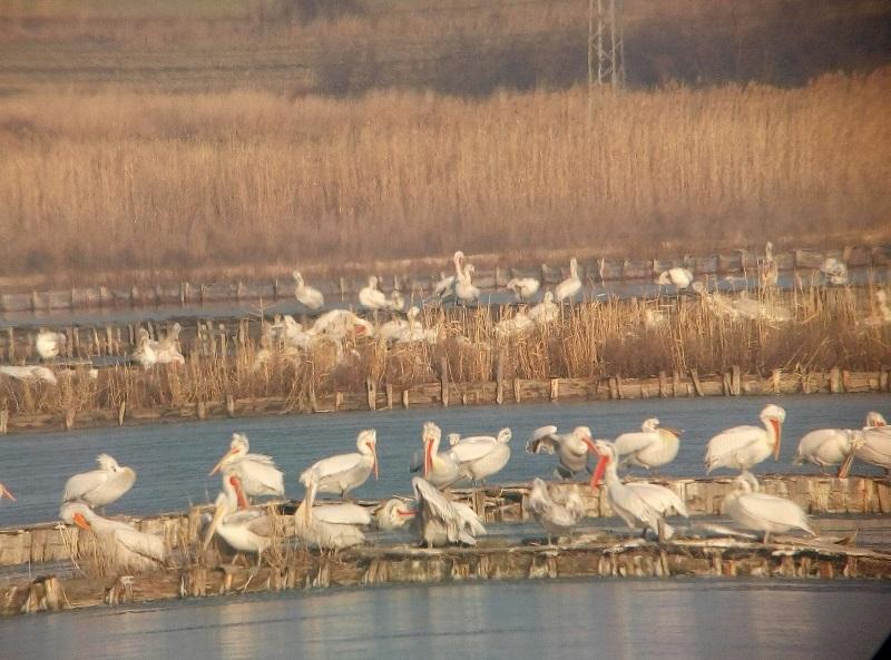 Бургас е градът на влажните зони и специално за празника, езерата са пълни с птици