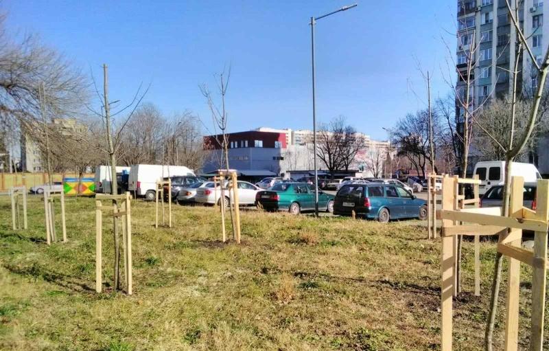 """Засаждат над 100 дървета в """"Славейков"""" и """"Лазур"""""""