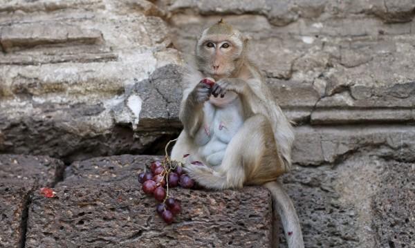 Маймуна спря тока на цяла Кения