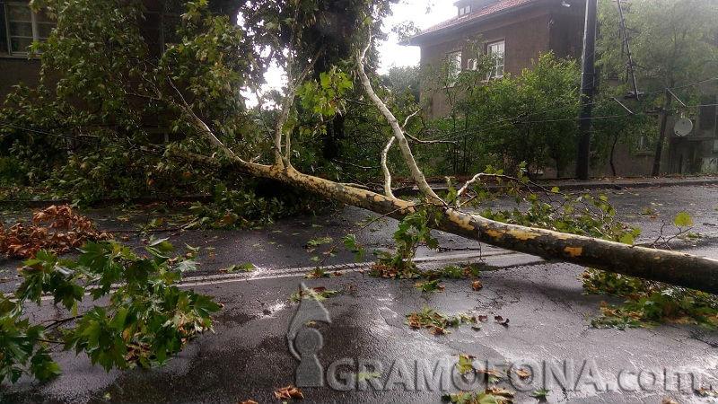 Дърво падна на бул. Мария Луиза и блокира движението