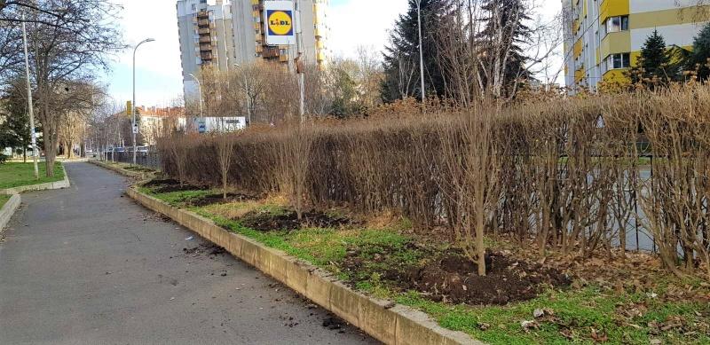 """Засадиха 30 дървета по ул. """"Одрин"""""""