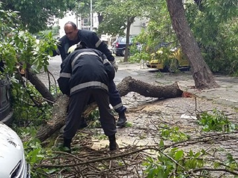 Община Бургас подменя старите и болни  дървета по улица Пробуда