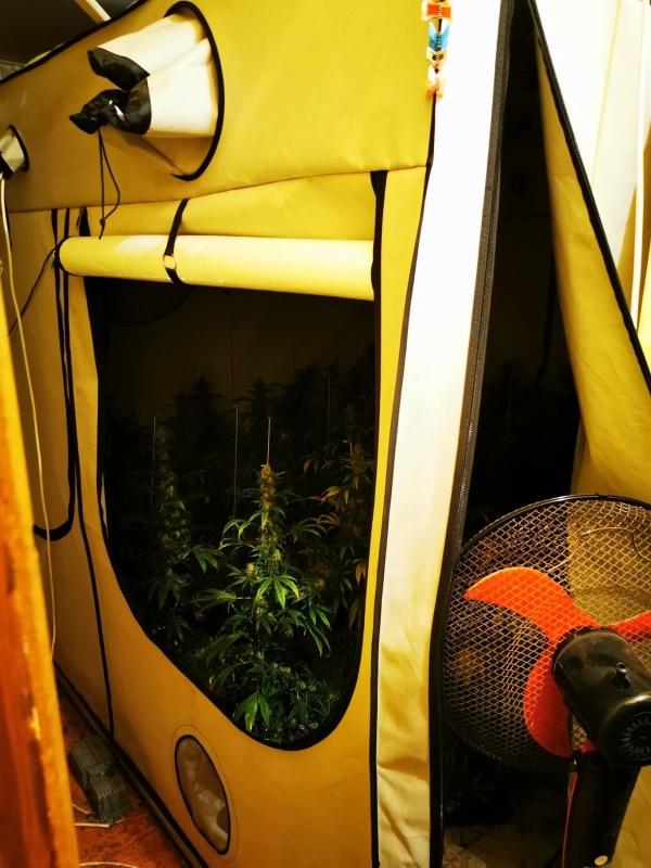 Мъж произвеждал марихуана в три апартамента в Несебър и Слънчев бряг (СНИМКИ)