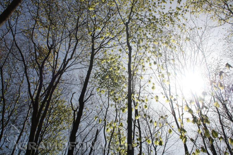 Вечната гора на Силкосия