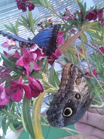 Забележителни нощни пеперуди на Флората