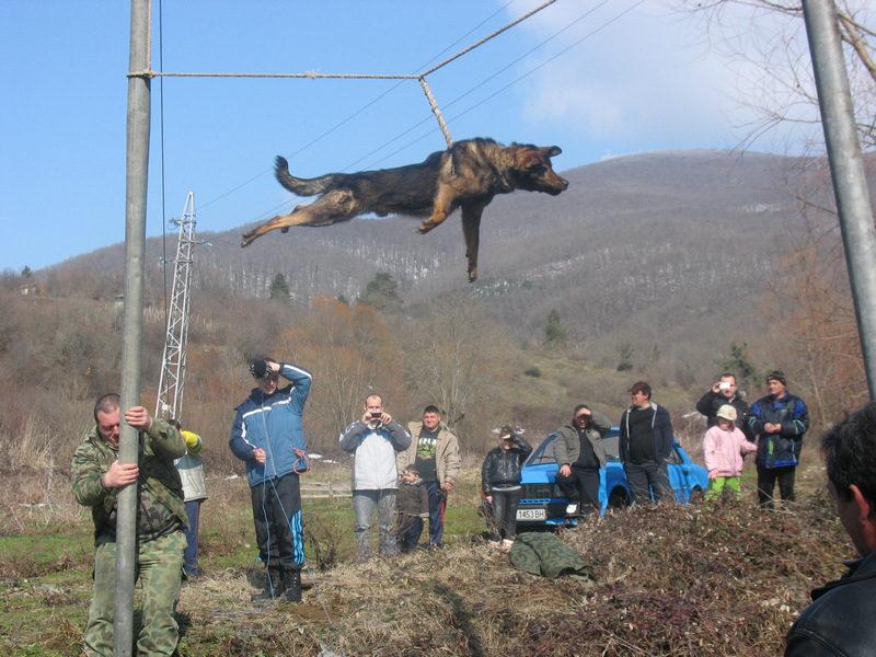 В Бродилово страдат за тричането на кучета