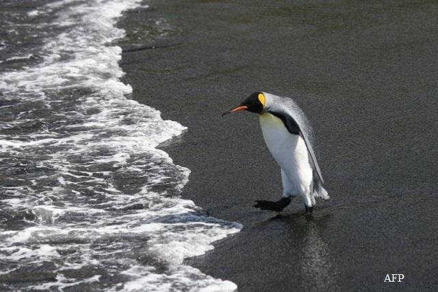 Ужасяващо: Хиляди пингвинчета са измрели за една нощ