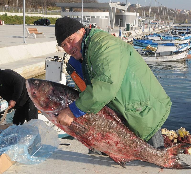 Рибарите в Сарафово в трескава подготовка за Никулден