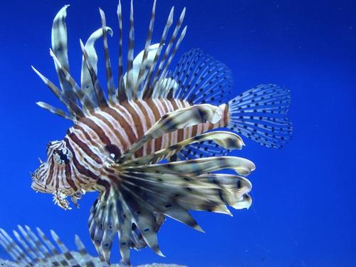 Най-екзотичните риби и влечуги се събират в Казиното
