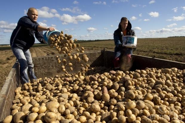 Земеделските стопани избират как да се облагат доходите им през 2017 г.