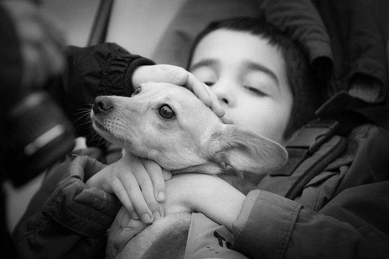 Благоворителна фотосесия превръща кучета от приют в терапевти на деца с увреждания