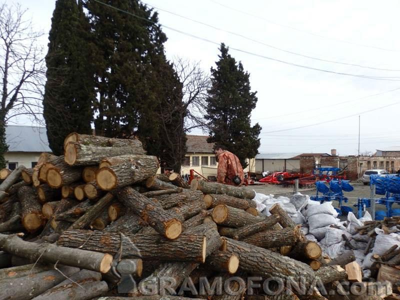 Царевци се запасяват с повече дърва за зимата