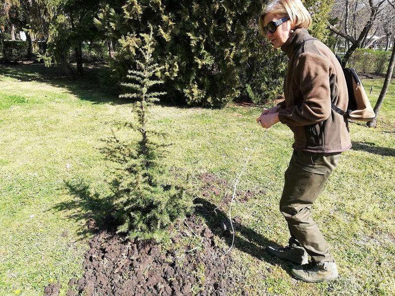 Акция по засаждане на дървета в Карнобат
