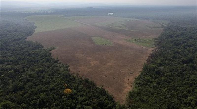 Норвегия първа забрани обезлесяването