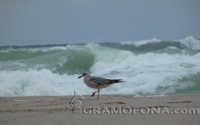РЗИ: Морето в Лозенец е чисто
