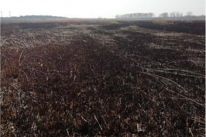 Източили и опожарили Шабленското езеро, за да не наводнява правителствената резиденция?