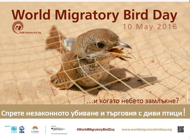 Световният ден на мигриращите птици е посветен на убиването и търговията с диви птици