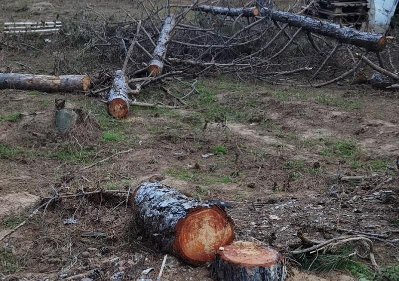 """Екоинспекцията в Бургас: Край къмпинг """"Градина"""" се сече незаконно"""