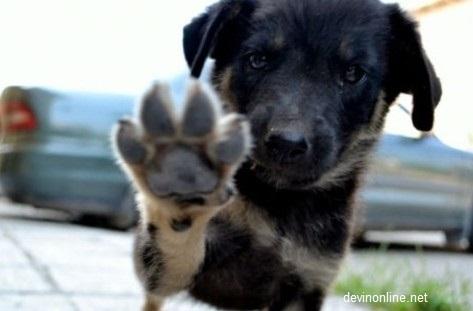 Отрова по улиците на Долно Езерово: Кой избива бездомни животни