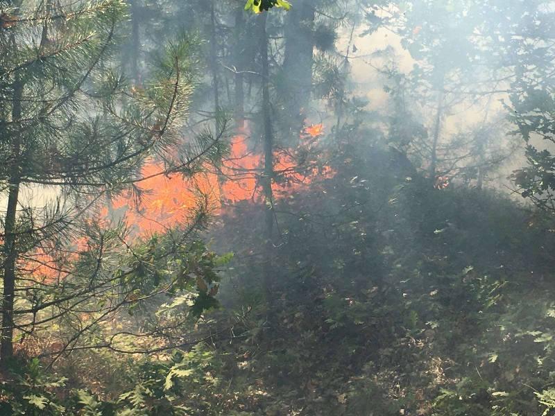 Седми час продължава гасенето на пожара в Руенско