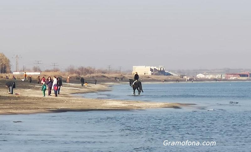 Кон на Северния плаж е атракция за бургазлии