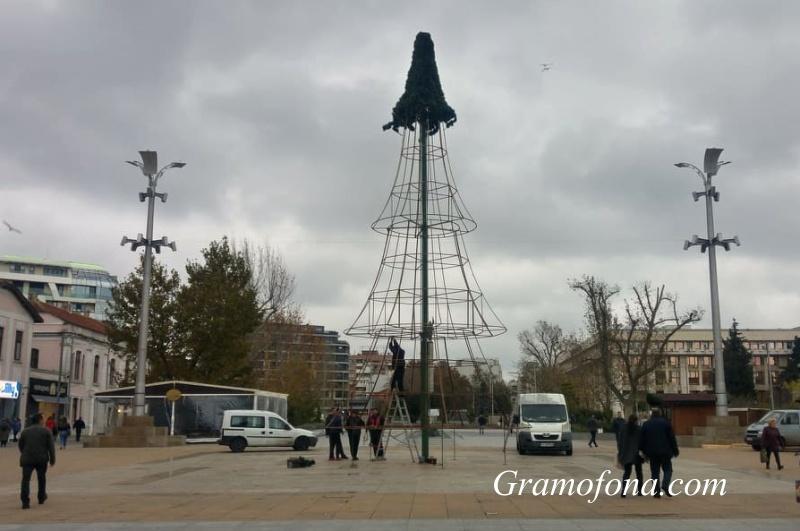 Вдигат голямата елха на Бургас