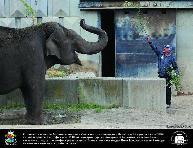 Иван, който разговаря със слоницата Артайда на немски