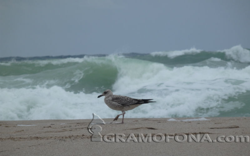 Борисов:  Нашето море е толкова чисто, колкото всички гръцки плажове
