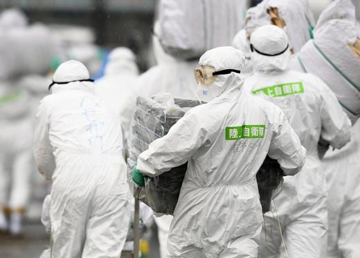 Свинска треска в Япония, изклаха стотици прасета