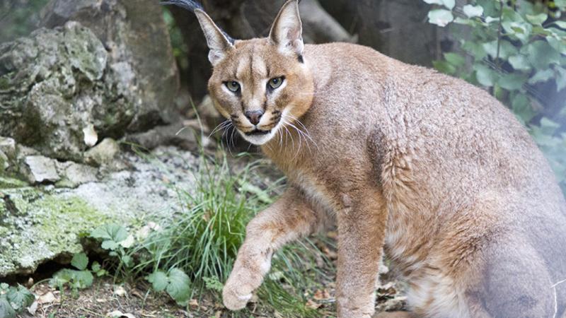 Дива котка предизвика катастрофа на пътя Сунгурларе – Карнобат