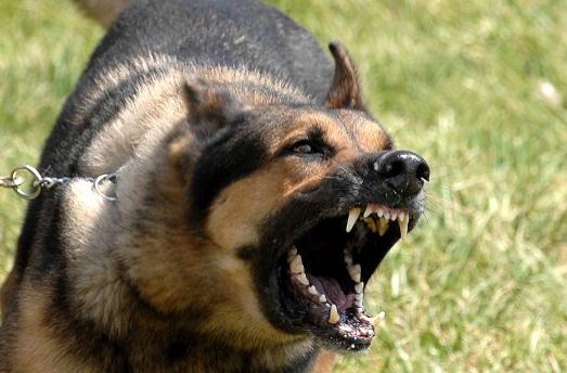 Куче нахапа дете в двора на детска градина