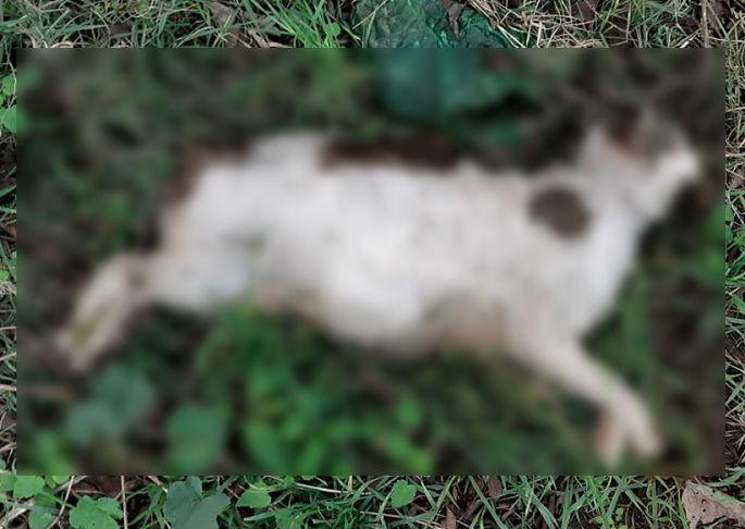 Цялото Второ районно на крак заради масовото избиване на котки в Славейков