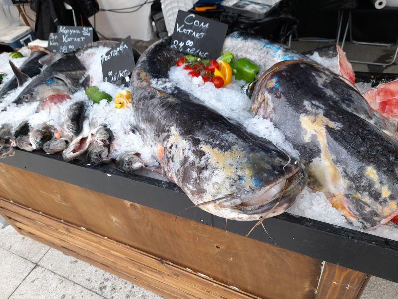 Лошото време не попречи на бургазлии да посетят Фестивала на рибата