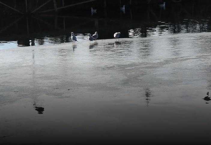 Охридското езеро замръзна (СНИМКИ)