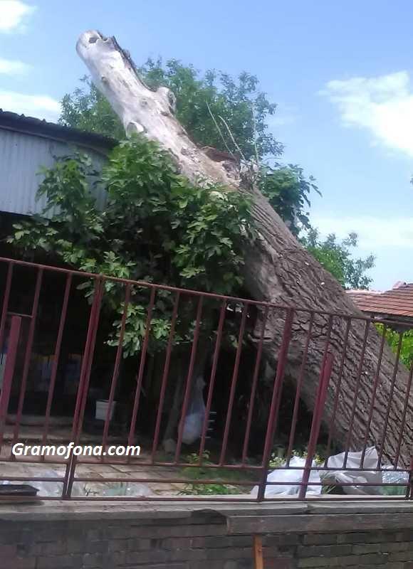 Силна буря повали огромно дърво върху магазин в Русокастро